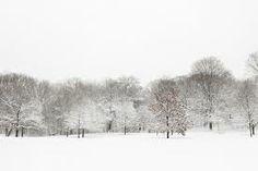 prospect park winter - Google Search