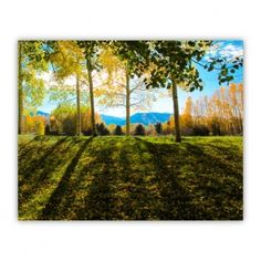 Aspen Tree Shadows Wood Print $25.00