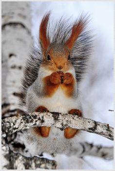Alpenstrasse : Nagyon szép színei annak a mókusnak , nem láttam még ilyet , de szeretnék :)