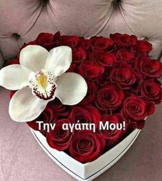Τριανταφύλλα Love Kiss, Forever Love, Floral Arrangements, Beautiful Pictures, Cake, Amor, Love Heart, Flower Arrangement, Pretty Pictures