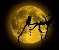 Black Cat Silhouette against full moon
