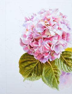 Watercolor Painting of Pink Hydrangea by Doris Joa - Work in Progress