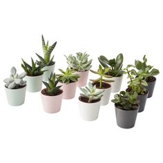 IKEA - SUCCULENT, Potted plant with pot, assorted, Native to dry areas all over the world. This plant is sensitive to cold water and under watering. Succulent Pots, Planting Succulents, Potted Plants, Indoor Plants, Planting Flowers, Planter Pots, Ficus, Dracaena Plant, Luz Solar