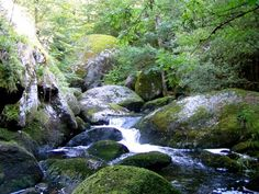 La Mare aux fees, Huelgoat Forest, Finistere, Brittany