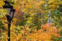 Park, Lantern, Autumn, Park, Street, City #park, #lantern, #autumn, #park, #street, #city