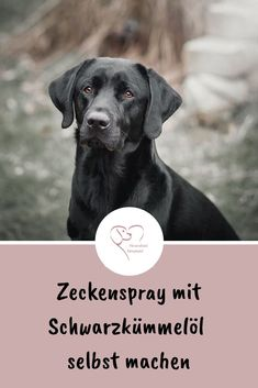 Make tick spray with black cumin oil yourself - Zeckenmittel - Chien Diy Pour Chien, Tick Spray For Dogs, Cumin Noir, Yorky, Black Seed, Cat Treats, Old Dogs, New Tricks, Animals And Pets