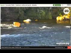 My take on Glazer and Backpack interaction the other night. #Bearcam, Katmai National Park, Brooks Falls, explore.org