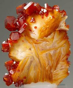 Vanadinte on Barite // Coud'a, Mibladen, Khénifra, Meknès-Tafilalet, Morocco / Mineral Friends Minerals And Gemstones, Rocks And Minerals, Natural Crystals, Stones And Crystals, Gem Stones, Orange Crystals, Beautiful Rocks, Mineral Stone, Rocks And Gems