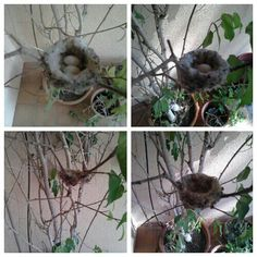 The stages of a Hummingbird. Happy Earth Day everyone!