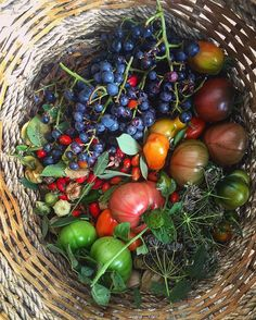 Autumn basket from the garden: rose hips tomatoes grapes physalis tomatillos jalapeños black currants wild strawberries #gardening #garden #secretgardenclub #food #cooking #wildfood #harvestmoon #england #uk #supperclub