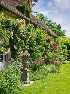 LES JARDINS DE ROQUELIN, LOIRE VALLEY, FRANCE: LAWN AND 15TH CENTURY FRENCH FARMHOUSE WITH ROSE 'PIERRE DE RONSARD'