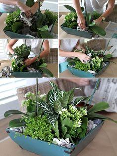diy orchid centerpiece step 1 orchids pinterest zimmerpflanzen sch ner wohnen und ideen. Black Bedroom Furniture Sets. Home Design Ideas