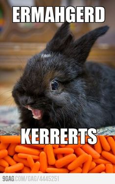 KERRERTS!!!! I've lol'd twice already at this pic, so I thought I should repin :)