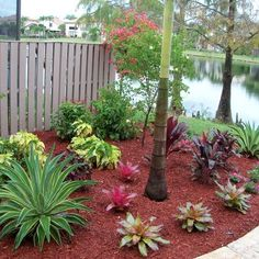 Gardening on Pinterest - Front Yard Landscaping Tropical Ideas