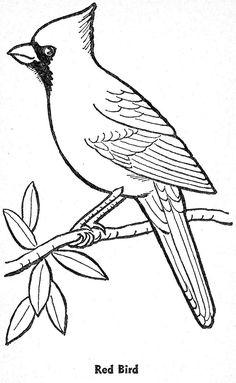 template for winter bird art lesson....