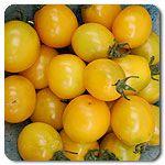 #highmowingseeds Organic Gold Nugget Tomato