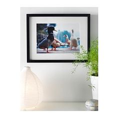 IKEA - RIBBA, Frame, 50x70 cm, , The mat enhances the picture and makes framing easy.The mat is acid-free and will not discolor the picture.Can be hung horizontally or vertically to fit in the space available.Adapted in size to hang several together.Front protection in plastic makes the frame safer to use.