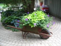Wooden wheelbarrow bursting with colour.