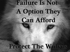 wolf wisdom - Other Wallpaper ID 1714632 - Desktop Nexus Animals