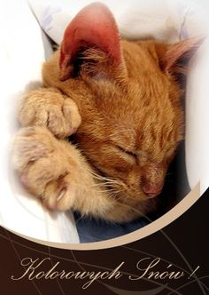 Kolorowych Snów! Cute Animals, Cats, Postcards, Behance, Bom Dia, Night, Pretty Animals, Gatos, Cutest Animals