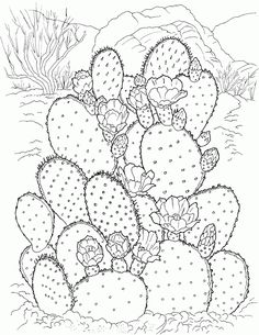 Coloring Pages of Cactus