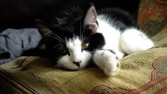 Is Your Cat Most Active At Night? Here's Why