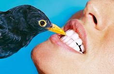 Dental bird