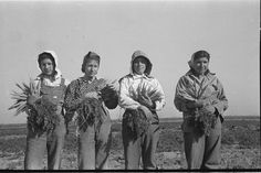 migrant farm workers 1930s | Mexican girls, carrot workers, Edinburg, Texas. 1939