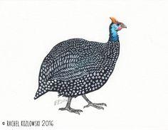 Guinea Fowl - Original Illustration - Pen and Watercolor - 5x7