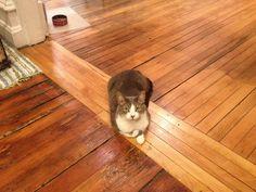 Poor loaf form. | Flickr - Photo Sharing!