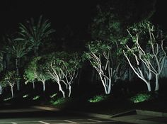 Attract attention to your trees by illuminating from the ground up!
