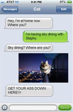 #Humor #CatHumor #FunnyWhatsapp