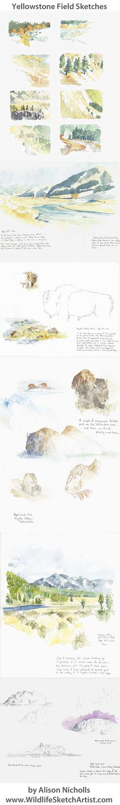 Yellowstone Field Sketches by Alison Nicholls