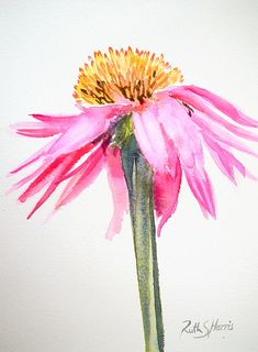 coneflower-ruth-harris.jpg 662×900 pixels