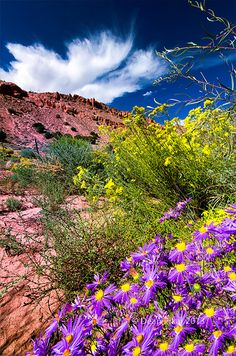 New Mexico Wildflowers
