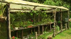 Vivero en Guadua - Ecoaldea Villa Maga, La Buitrera - Cali, Colombia