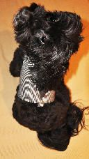 My new vest by Vienna Couture Canine