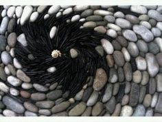 A vortex of cobbles, roof slate and a sea shell