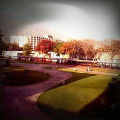 Vista de la UCV desde la Biblioteca Central / Caracas, Venezuela.