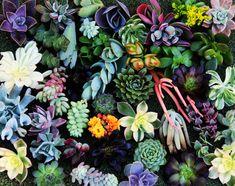 The Pursuit Aesthetic repined Beneva Flowers #succluents