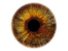olhar olho humano anatomia ver visualizar padrao ocular