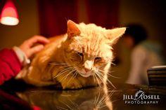 Roy the Spa Mascot Cat  www.shibuispa.com