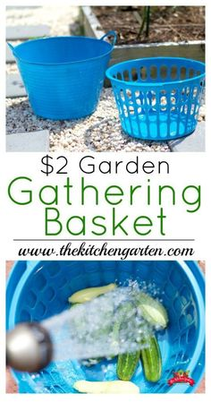 DIY Garden Gathering Basket Here's an easy way to gather and wash your garden veggies. There's no wasted water either!Here's an easy way to gather and wash your garden veggies. There's no wasted water either! Organic Vegetables, Growing Vegetables, Winter Vegetables, Organic Herbs, Organic Gardening Tips, Vegetable Gardening, Veggie Gardens, Gardening Books, Gardening Courses