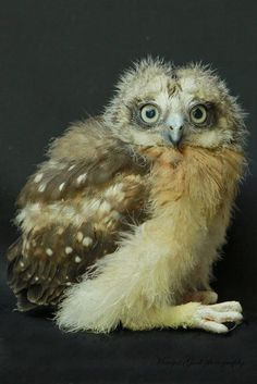 What a Beautiful Owl