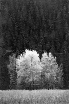 Doug Fluckiger: Paintings in Graphite