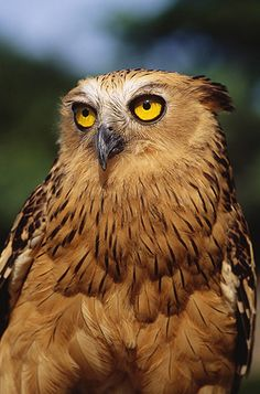 Fish Owl and my expression when the kids lie to me -