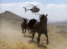 Activist Groups Slam Proposal To Kill More Than 44,000 Wild Horses   Huffington…