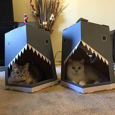 「It's shark week! @SharkWeek #sharkweek @Discovery  Nala shark house available online www.nalacat.com」