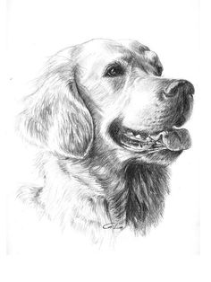 Labrador by Dragan Gilic Graphite Drawings, Pencil Art Drawings, Car Drawings, Cute Animal Drawings, Animal Sketches, Stippling Art, Golden Retriever, Dog Paintings, Dog Tattoos