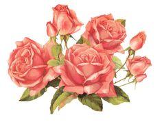 Vintage Rose Clip Art Free | Back to Post :Rose Border Clip Art